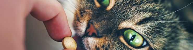 green-eyed tabby cat taking a pill