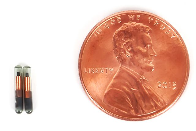 microchip size comparison to a penny