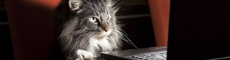 Maine Coon cat at a computer